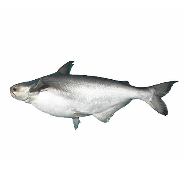 Cá Hú Nguyên Con Không Làm Sẵn (Kg) ~1.1Kg/Con